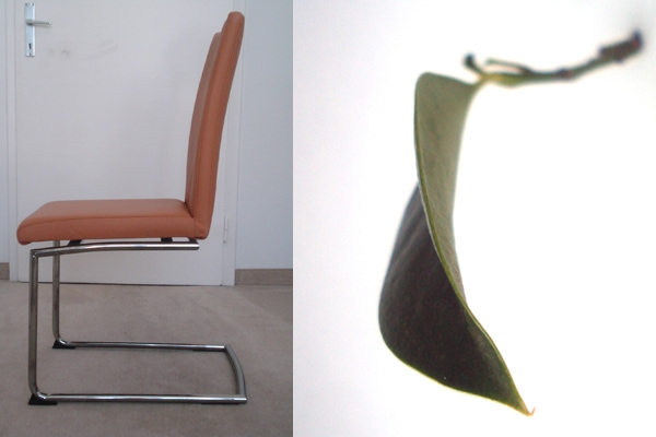 A Cantilever Chair And A Leaf As Inspiration